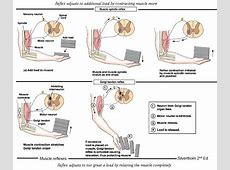Dr Will McCarthy's Science Site: The NERVOUS SYSTEM: An ... Hgms
