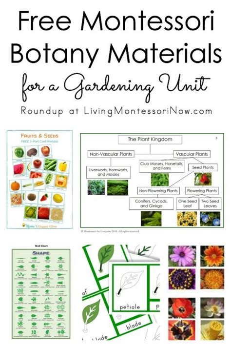 meaning of activities of gardening living montessori now information and inspiration for parents and teachers