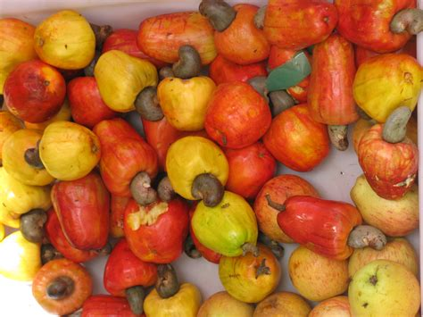 agric ministry ll plant 2m cashew annually the