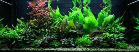 guide to aquascaping 17 best images about project fish tank on pinterest