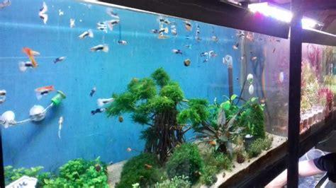 tempat beli ikan hias air tawar  bogor jual