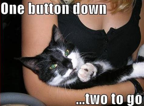 Toilet Paper Funny One Button Down Cat Humor