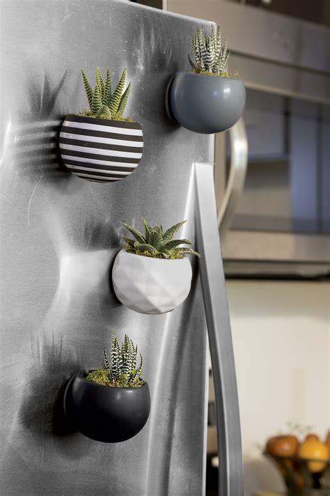 indoor succulent gardens mini magnet succulent garden