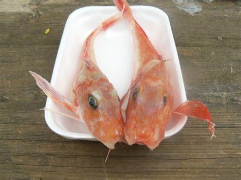 come cucinare una cernia intera bollire il pesce i frutti di mare e i crostacei