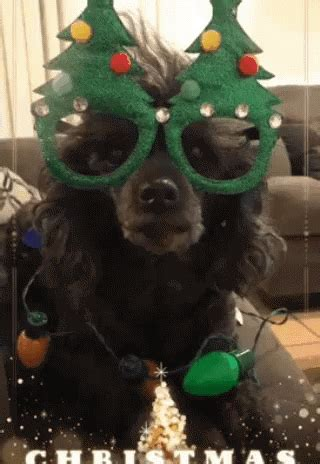 christmas dog gifs tenor