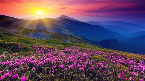 Flower Mountain flowers wallpapers wallpaper cave