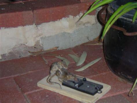 imagenes reales necrofilia mouse necrophilia picture ebaum s world