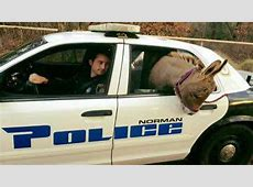 Norman Officer Rescues Donkey On The Loose - News On 6 G Recipes