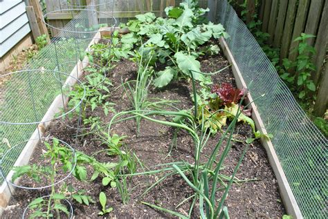year vegetable gardening ramble on lessons from the vegetable garden year 1
