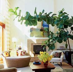 outdoors indoors images indoor house plants