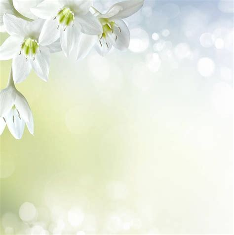 soft white color soft white floral background backgrounds in colour