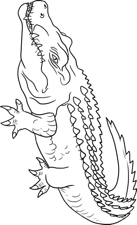 Crocodiles Coloring Pages - Coloring Home