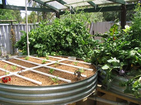 backyard aquaponics plans aquaponics fish to grow bed ratio plans diy