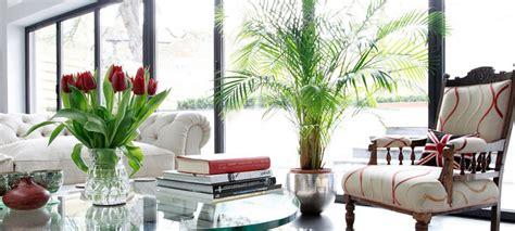 tutte le piante da appartamento scoprire le piante per appartamento