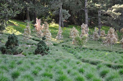 expert advice 8 tips for a meadow garden from grass guru