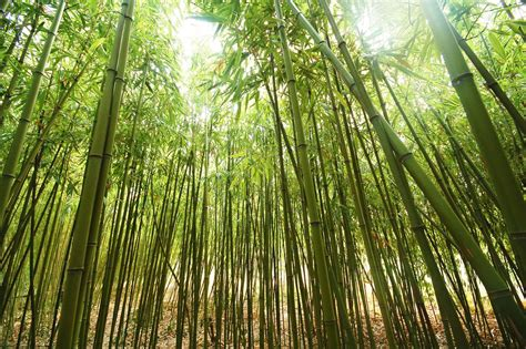 power of persistence the chinese bamboo tree james
