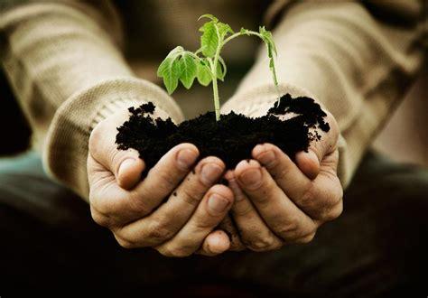 creating an indoor herb garden creating an indoor herb garden during the winter season
