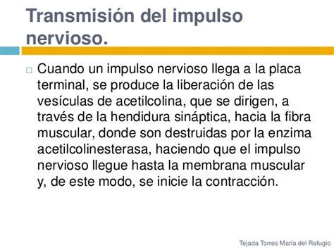 Hasta Cuando Se Pagan Las Placas En Cd Juarez Sin Recargos | transmisi 243 n de impulsos desde los nervios a las fibras del