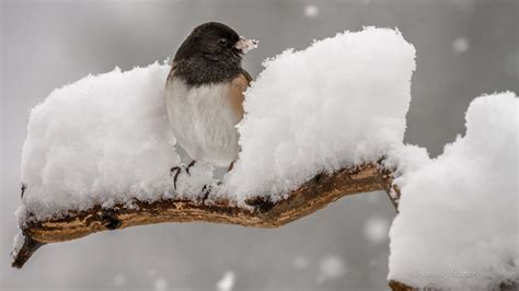 how birds survive the cold feathers food warmth all