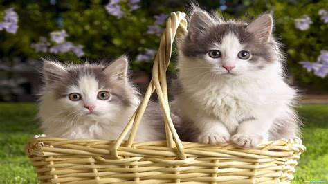 and cat pictures cats animals wallpapers and images hd photos gallery