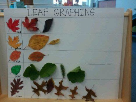 kindergarten activities with leaves fall into fun with leaf activities leaf identification