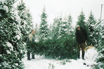 Tree Farm Near Me - tell me why the world is the future of trees