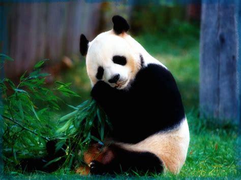 imagenes de paisajes y animales hermosos fotos de paisajes con animales muy hermosos im 225 genes de