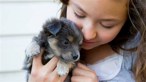 cani adatti per appartamento cani e gatti le razze pi 249 adatte ai bambini lifegate