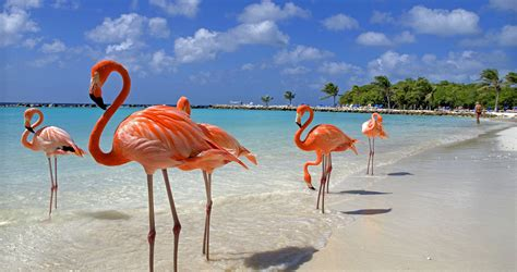 Happy Aruba Vacations   Lisa Hoppe Travel Consulting