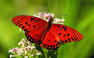 the butterfly project karen pryor clicker training