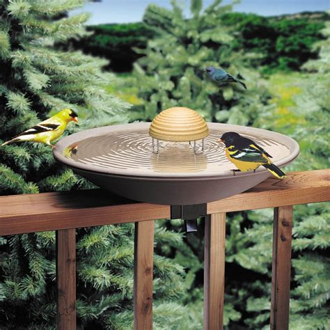 backyard bird shop 28 images in store products