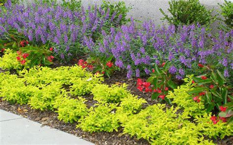 color me mine flower mound duranta plant care images