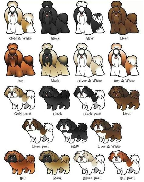 dog color pattern names great color and pattern chart for shih tzu pinteres