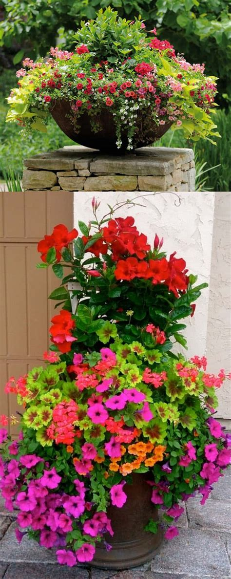 stunning container garden planting designs page