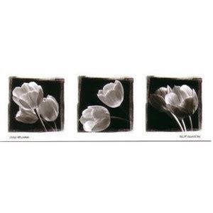 Plakat Castorama by Obrazy Castorama Tulipany Sprawdź Ceny W 61 Sklepach