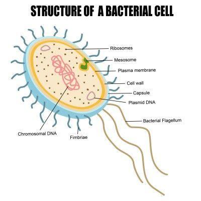 plant cells bacteria protists  fungi