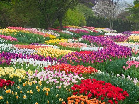 Most Beautiful Flower Gardens In The World World Keukenhof Park Nerlands Sprg Garden Keukenhof Most Beautiful Flower Gardens In The