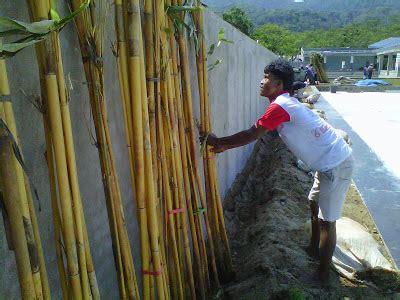 Jual Lu Hias Jepang jual bambu hias bambu taman bambu kuning bambu