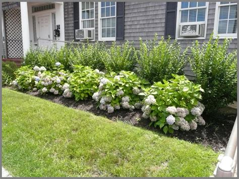 Nursery Garden Ideas This Garden Picture Is Of A Simple Foundation Of Endless Summer Hydrangea Backed Up By A
