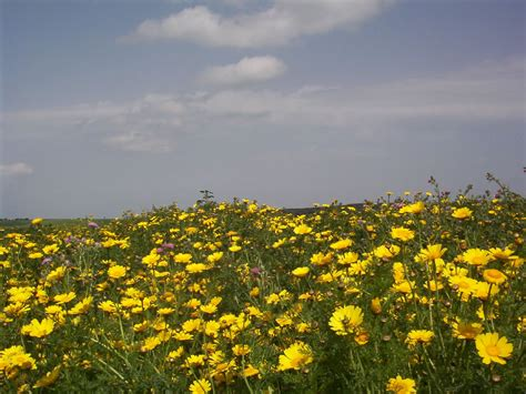 fiori immagini gratis fiori immagini gratis foto desktop scaricare
