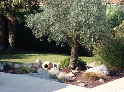 massif autour d un olivier olivier