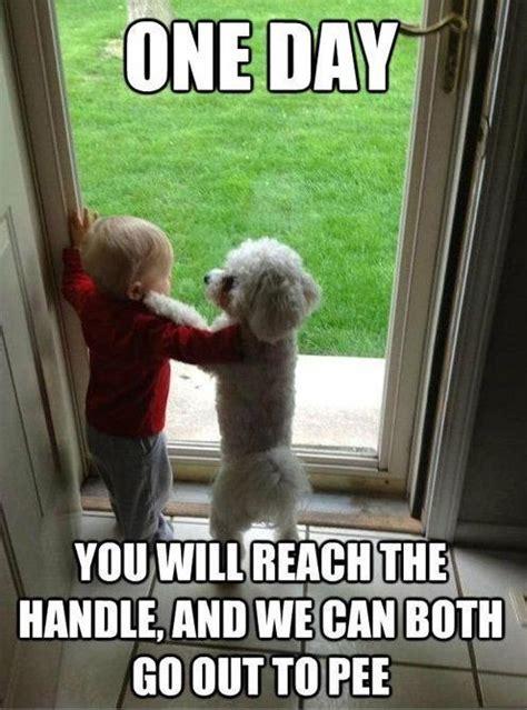 Funny Dog Pictures Memes - 77 best dog memes images on pinterest dog cat funny