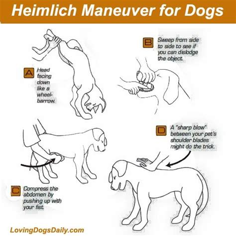 heimlich maneuver for dogs 1000 images about pet care on