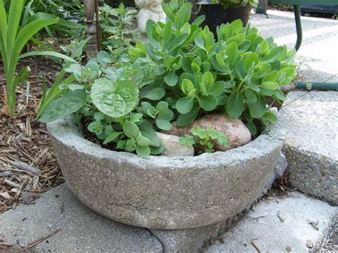 this pot is made with portland cement peat moss and