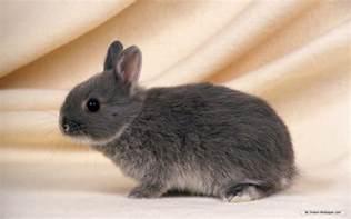 rabbit bunny bunnies bunny rabbits wallpaper 16438007 fanpop