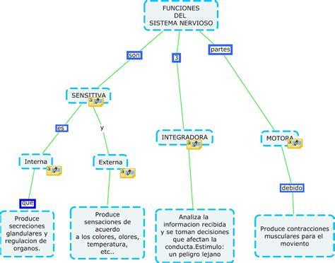 mapa conceptual del sistema nervioso zonavip 30 christian mapa conceptual funciones del