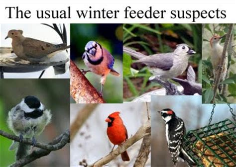 wild birds unlimited birds you see at michigan bird feeders