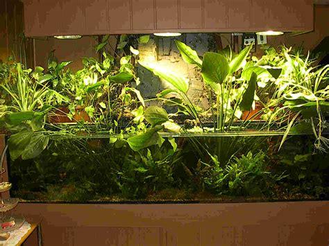 Aquarium For Home Decoration community mein aquarium aqua4you de