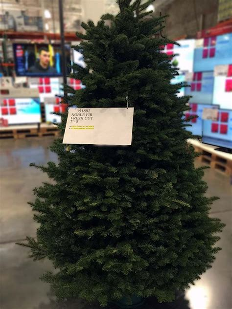 costco real tree 2018 costco insider