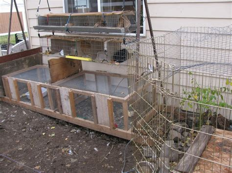 backyard quail pens and quail housing quail pens housing page 5